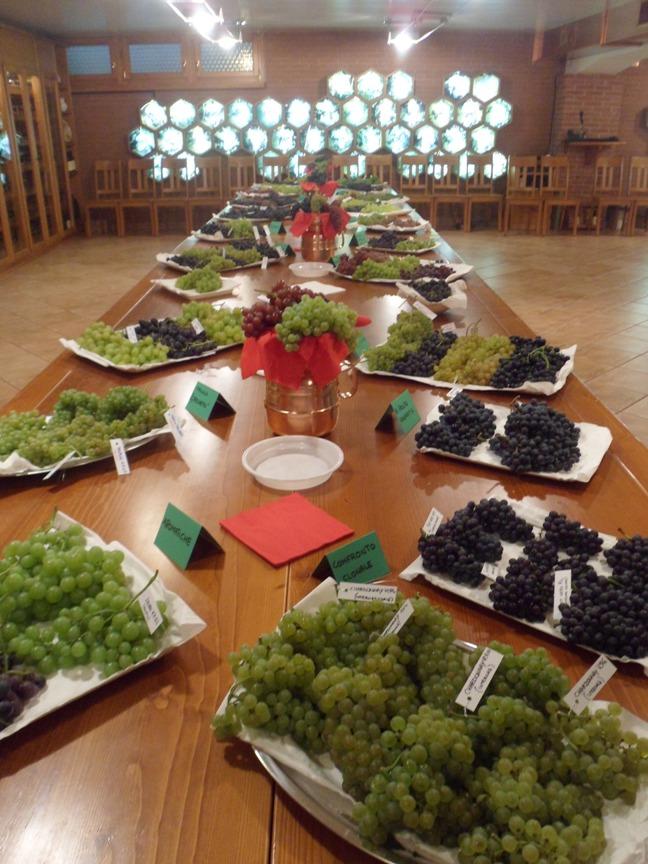 Assaggio delle uve a Casa 40