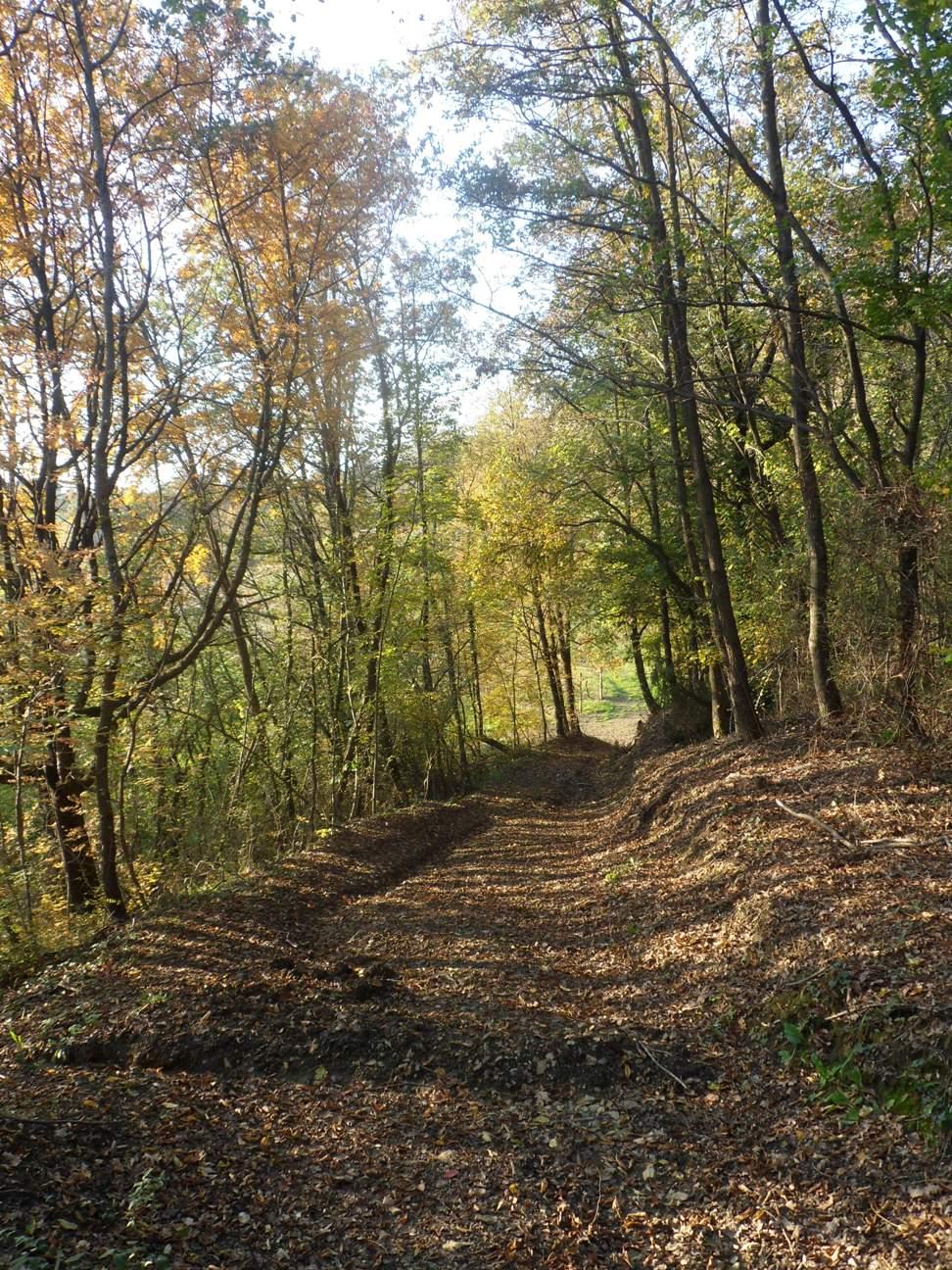Sentiero delle Poiane a Prepotto