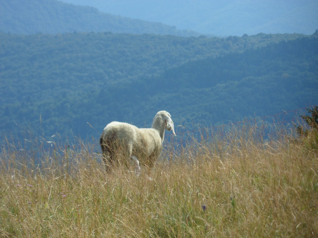 Agricoltura montana