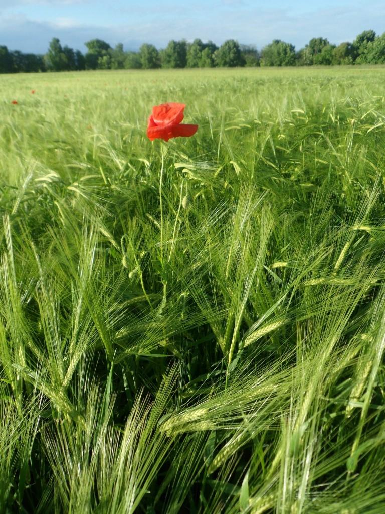 La biodiversità in agricoltura