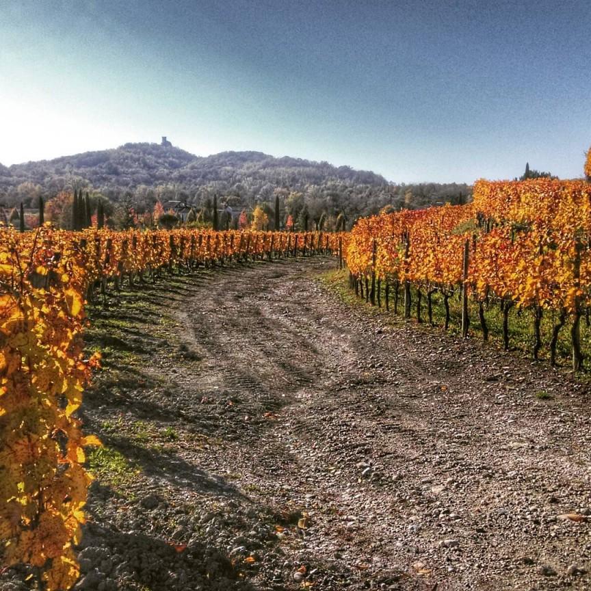 Autumn is magic: a golden wine route! #fvglive #friuliveneziagiulia #winelover #lonelyplanet #winetour #slowtourism #vineyard #nature #Autumn #igersfvg