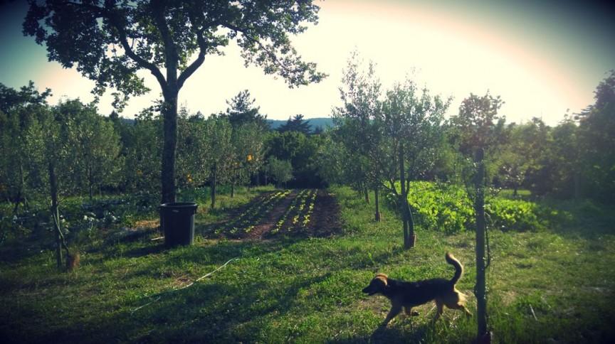 Azienda Agricola Stanissa ad Aurisina