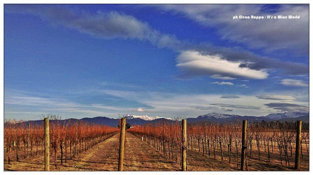 Il Friuli Venezia Giulia del vino, anche in inverno!