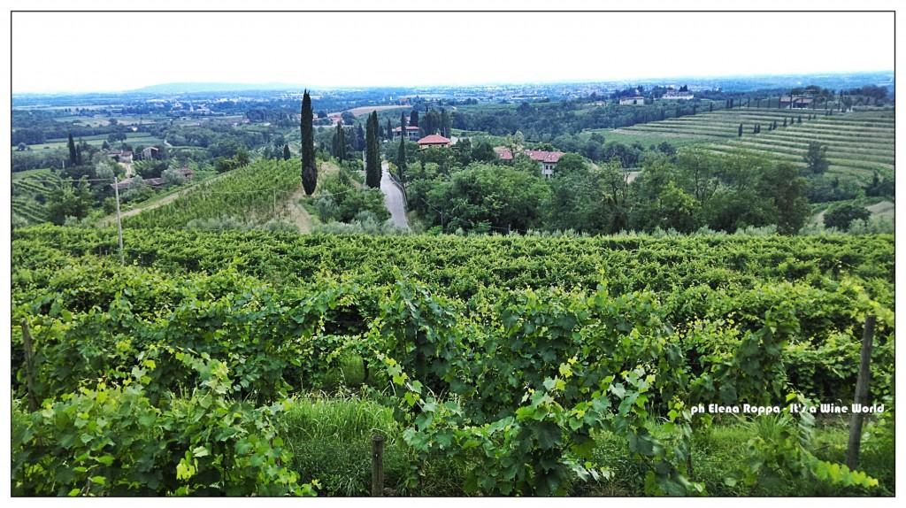 Friuli Venezia Giulia, i Colli Orientali