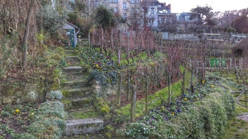 La Vigna di Montmartre a Parigi