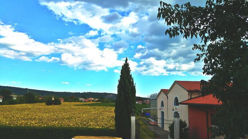 Uno scorcio della cantina Bortoluzzi a Gradisca d'Isonzo